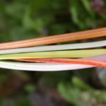 raibow swiss chard stems